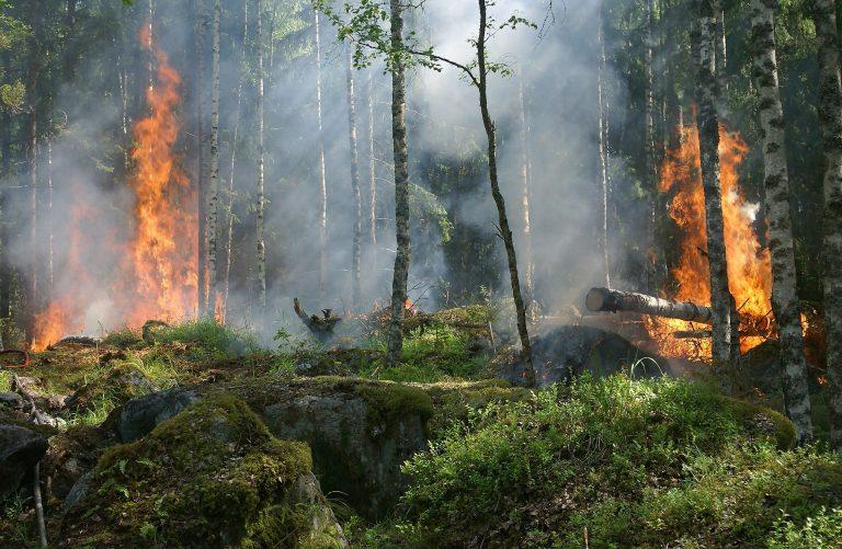 Unsere Wälder akut vom Klimawandel bedroht – dringendes Handel notwendig